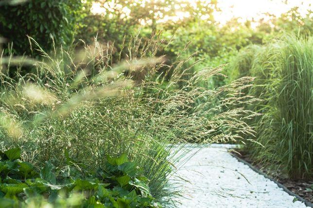 Trawnik z rolki - trawnik z siewu - zakładanie - przekopywanie ziemii