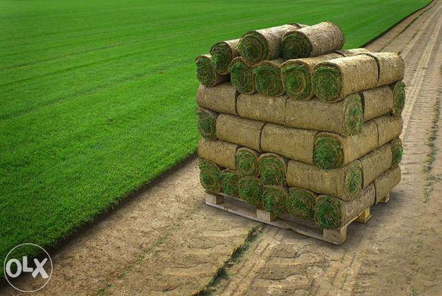 Trawa z rolki PRODUCENT Sprzedaż i montaż, ogrody poznań