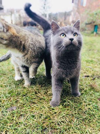 Котёнок /кошки /
