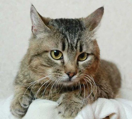 Котики и кошечки из мини приюта в поисках любящей семьи!