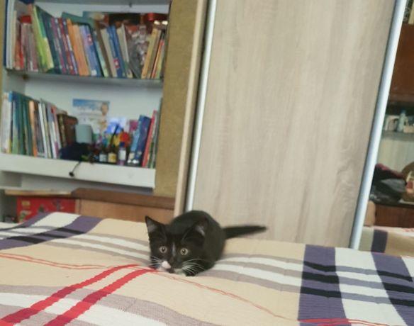 Кицька шукає люблячу сім'ю!)