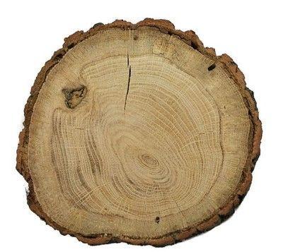 Plastry plaster drewna dąb 14 - 17 cm szlifowany