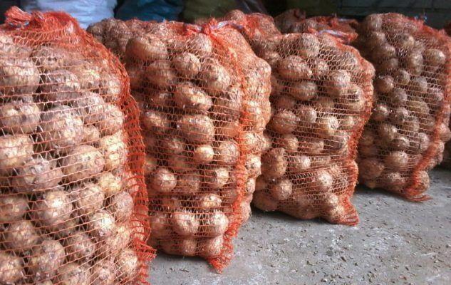 Ziemniaki Vineta,Gala