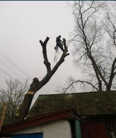 Спилить дерево срезать дерево удалить дерево кронировать Спил