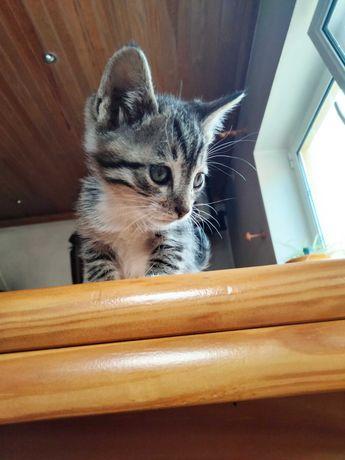 Gatos/as para adoção