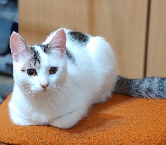 потерялась кошка / Загубилась кішка