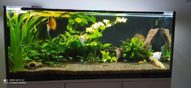 Rośliny akwariowe Lotos