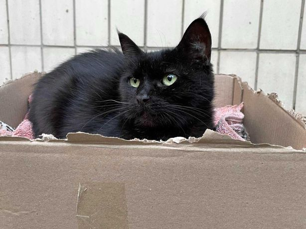 Чёрная Кошка ищет хозяев