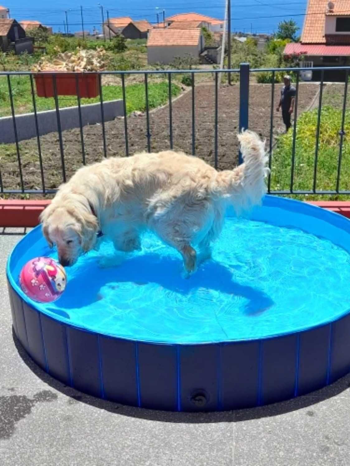 Duży Basen Dla Psa Labrador Wilczura Husky + GRATIS Wysoka Jakość