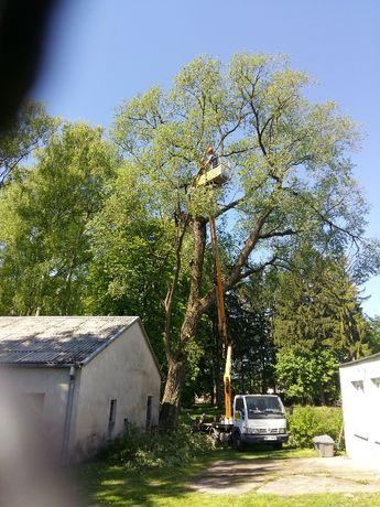 Wycinka drzew; pielęgnacja,cięcie drzew, zieleni, oczyszczanie działek