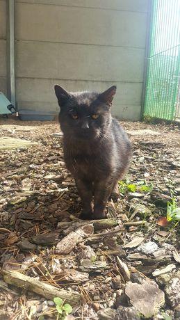 Józia 16-letnia kotka z białaczką