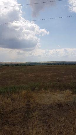 Продам 4Гектара земли в селе Григоровка