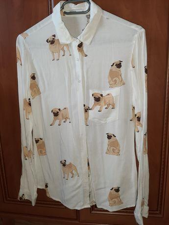 Koszula w mopsy Cropp 34