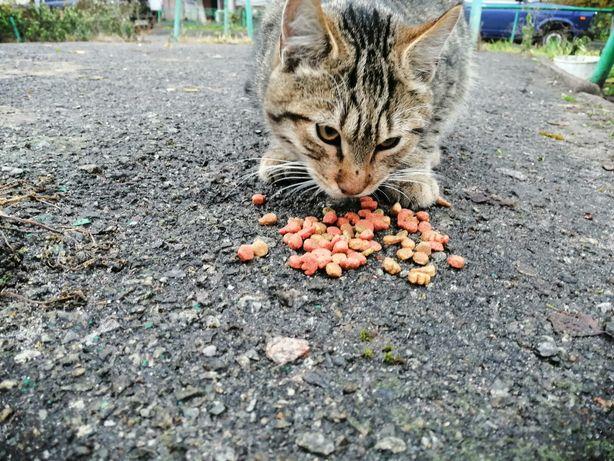 Найден кот тигровый. Ищет новый дом