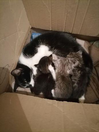 Отдам котят , могут остаться на улице ((