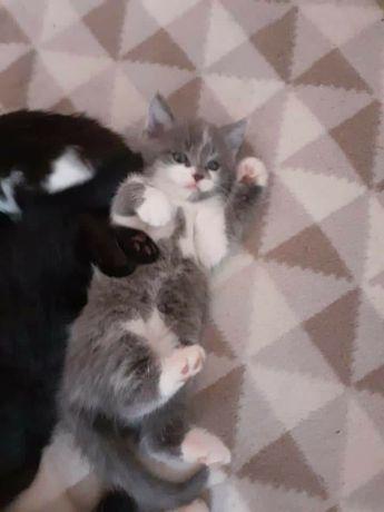 Kotki do oddania w dobre ręce