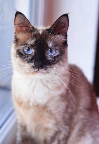 Кошечка Уляся в хорошие руки! (2 года, стерильна)