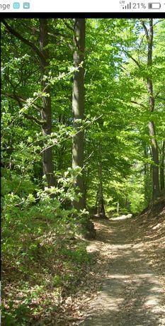 Sprzedam ziemie z lasem