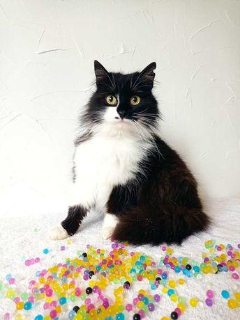 Отдам кошку в частный дом, пушистая черно-белая