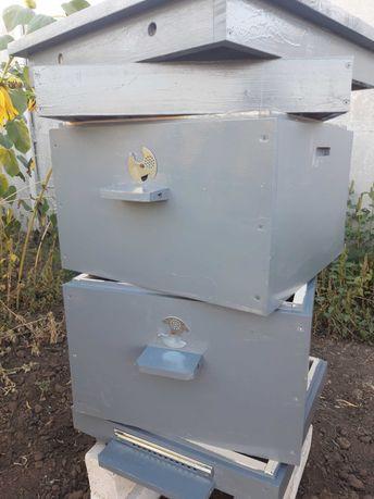 Улики с пчёлами на рамке дадан