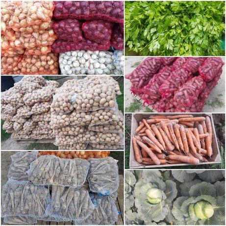 Warzywa: buraki, marchew, kapusta, cebula, ziemniaki, pietruszka.