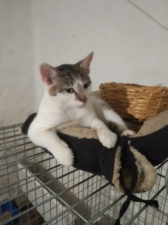 Котик хлопчик. Кошеня. Кіт