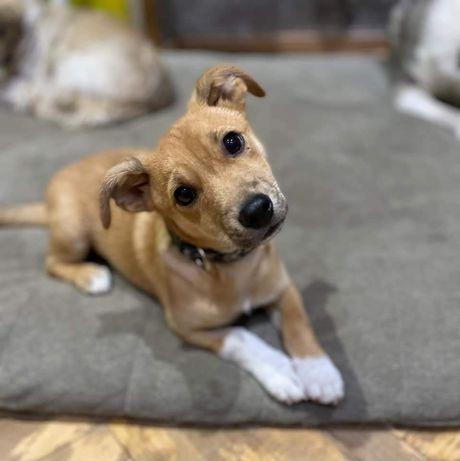 Майлі шукає дім, собака, цуцик, щенок