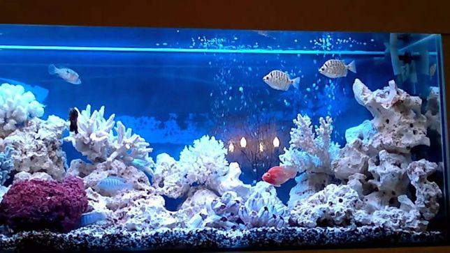 запуск,дизайн и чистка аквариумов