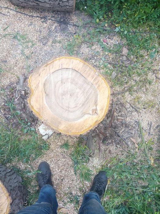 Спилим деревя любой сложности Константиновка - изображение 1