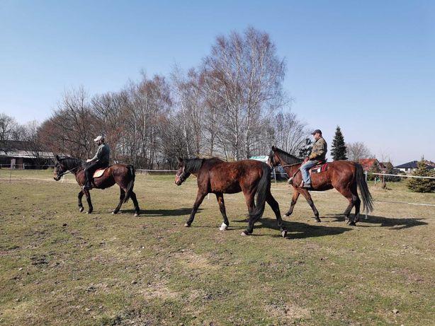 Jazda konna, konie, osiołek