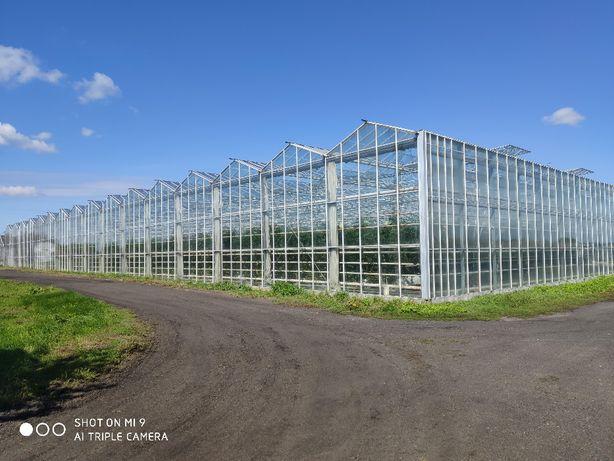 Sprzedam szklarnia , szklarnie Venlo - 5 760 m2 - 8 naw - wys. 5,35 -