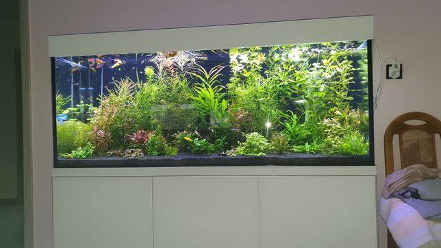 Akwarium 450l z calym wyposażeniem