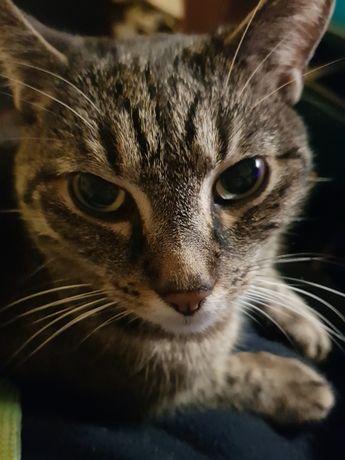 Zaginął kot w okolicach Koziegłów koło Poznania