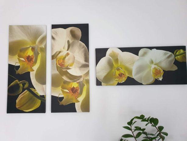 Tryptyk Orchidea