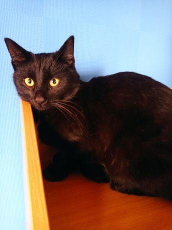 Черный котик в частный дом