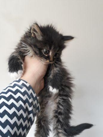 Кошенята в добрі руки 2 кіточки дівчтатка