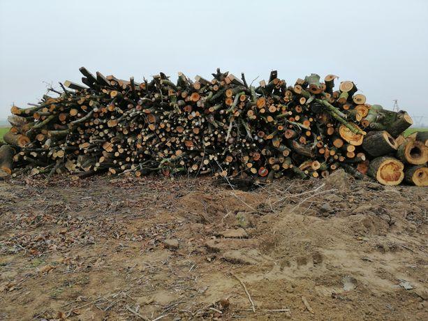 Drzewo Drewno na opał
