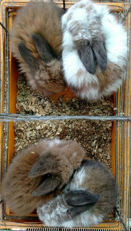 РучныеМини кролики