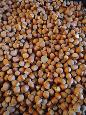 Продам орех Лещина
