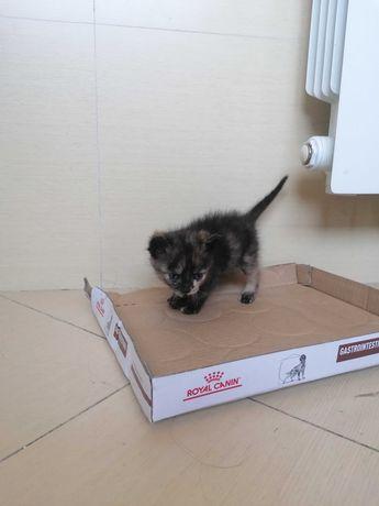 Gatinhos para Adopção