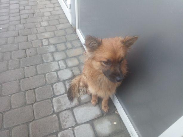 Замечен пёс потеряшка на метро Позняки