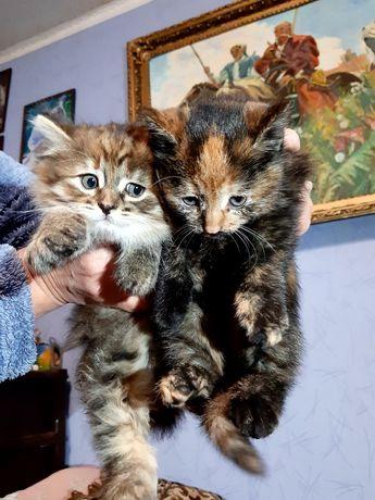 Котики котята кошка