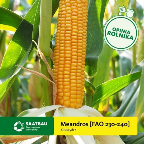 Kukurydza MEADROS 230/40 FAO Saatbau Nasiona Kukurydzy Cena Brutto