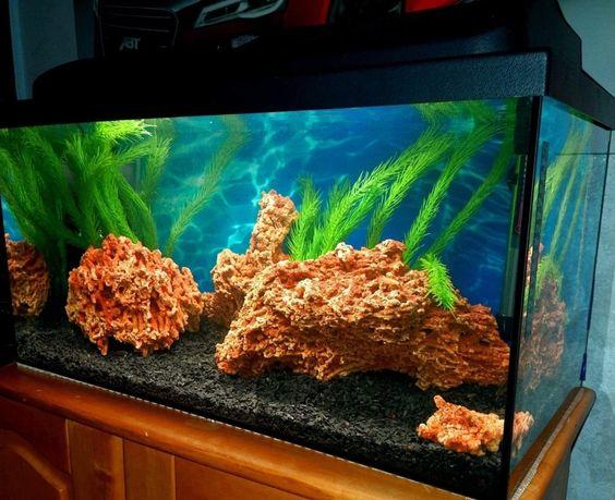 Akwarium 60l + wyposazenie