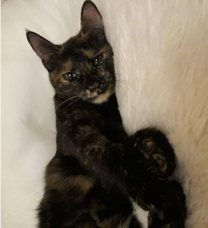 Котята кошечки в дар в добрые руки