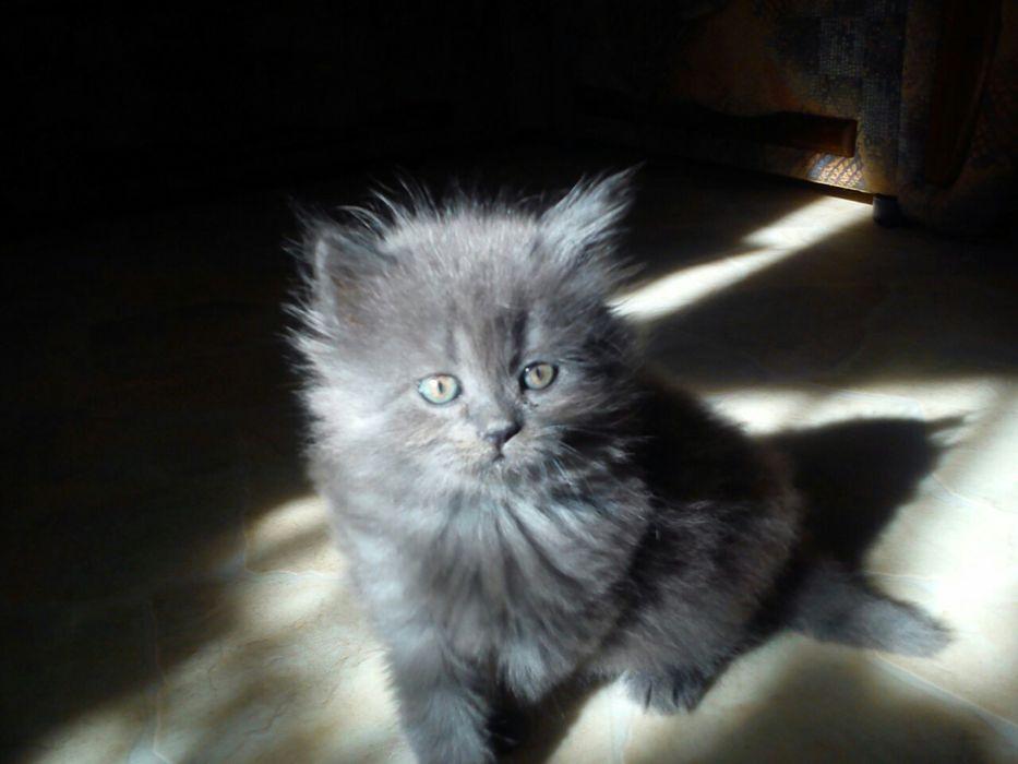 Котёнок. Днепр - изображение 1