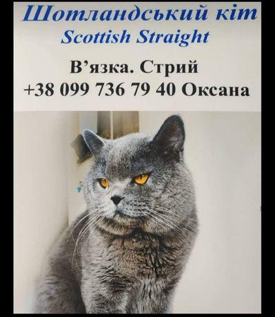 Шотландець на в'язку