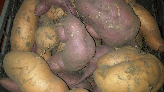 Продам Батат сладкий картофель