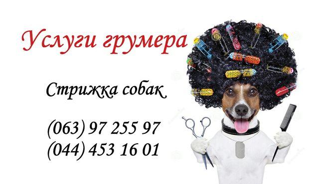 Стрижка собак 300гр. мелких пород на дому / с выездом