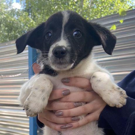 Пуговка 2 месяца собака собачка щенок щеня